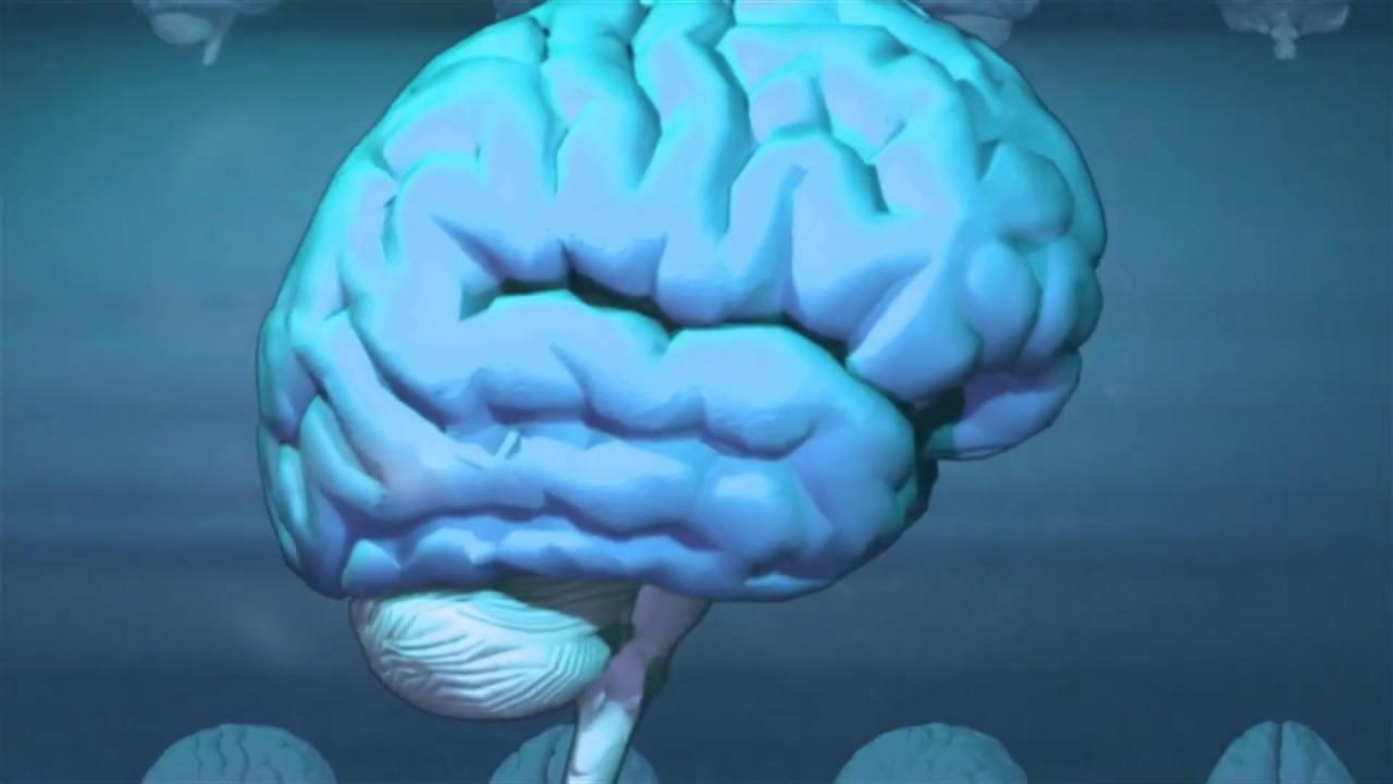 Levá mozková hemisféra-dobrý sluha, ale špatný pán?