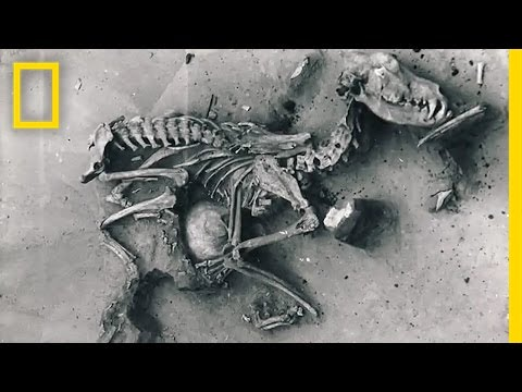 Dogs: (Prehistoric) Man's Best Friend | National Geographic