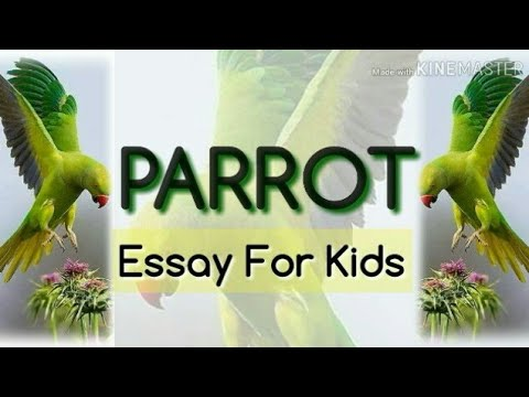 Essay on parrot for kids esl school book review advice
