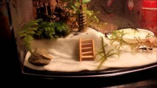 New Baby Fire Belly Newt (eft) Setup