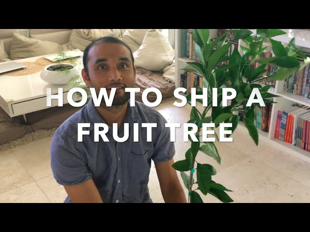 How to ship a fruit tree - Unboxing of a 4ft citrus