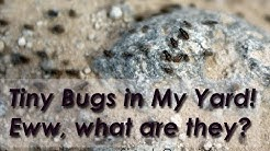 Tiny Bugs