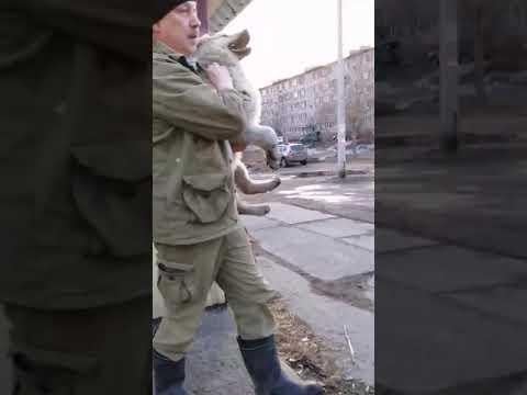 Работа ООО Престиж г. Апатиты Мурманской области. Фирма по отлову бездомных животных, им неписаны ФЗ