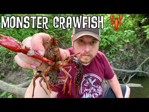Catch & Cook Crawfish - 12 Day Budget Survival Challenge - Day 2 - Night Hunt