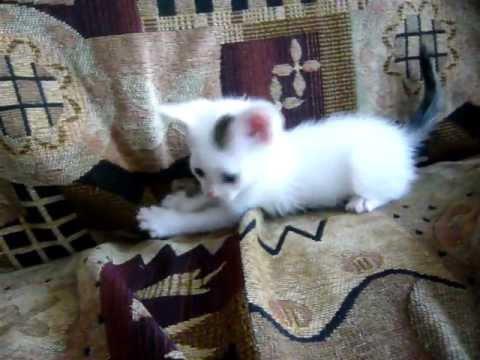 Я пушистый беленький котенок.wmv - YouTube