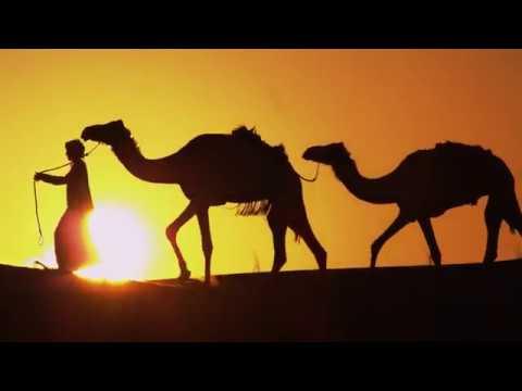 Dubai's Safari Guide – Visit Dubai