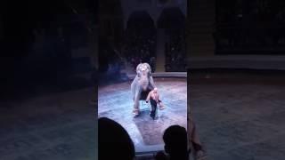 Ёбля слона