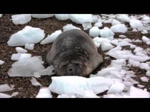 Antarctic Ecosystem