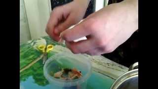 Рецепт приготовления креветок. Креветки с луком и гренками