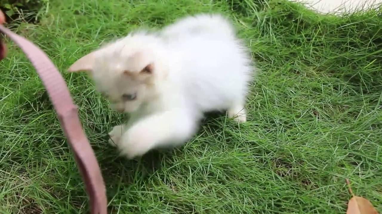 Cute Cat Baby Kitten Very Funny Cat