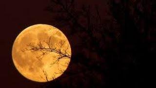 Lunar Calendar series - October