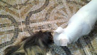 Котята тв это я Алена я в нижнем новгороде :-) Риакция моей морской свинке и не моей собаке
