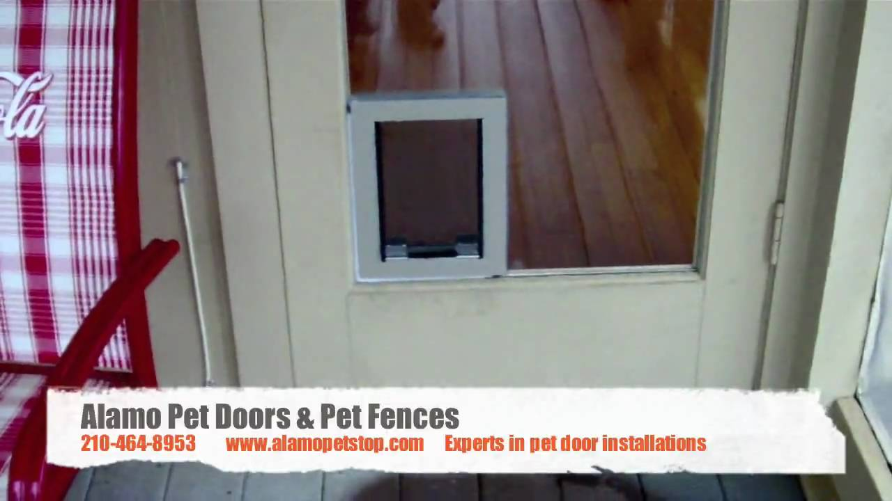 Hale Pet Door- In Glass Installation - YouTube
