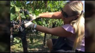 Виноград, итальянский шашлык и вино: что может быть лучше? - GARDA STAR(, 2016-09-26T20:10:24.000Z)
