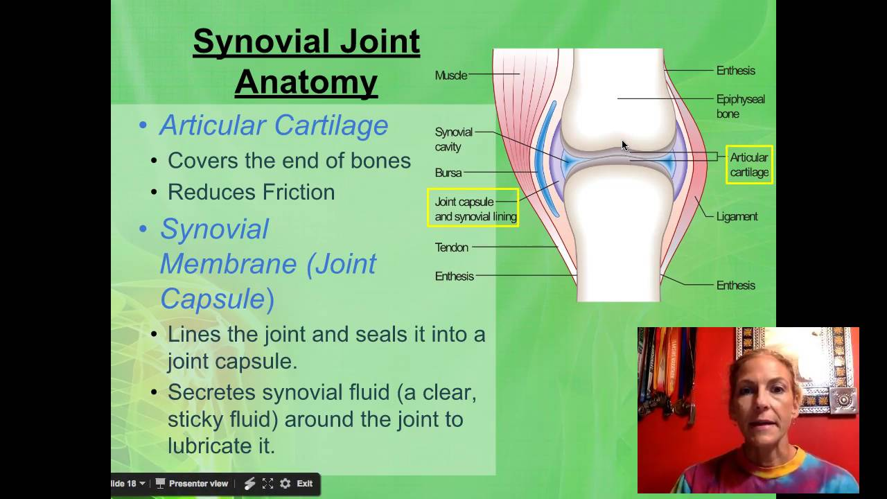 Synovial Joint Anatomy - YouTube