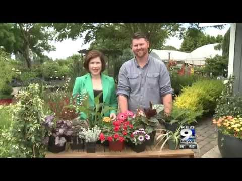 In the Garden: Pet Friendly Plants