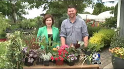 In the Garden: Pet Friendly Plants
