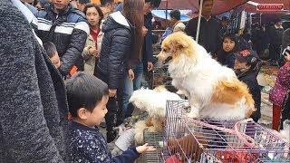 Phiên  chợ bán chó mèo cảnh lạ lùng và độc đáo