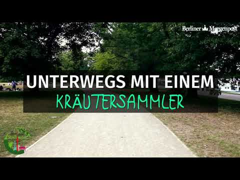 Berliner Morgenpost - Wildkräuter Aus Der Stadt Berlin - Interview  Manuel Larbig