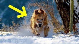 Perro encuentra a un niño abandonado en un clima de menos 21 grados y sabe exactamente qué hacer