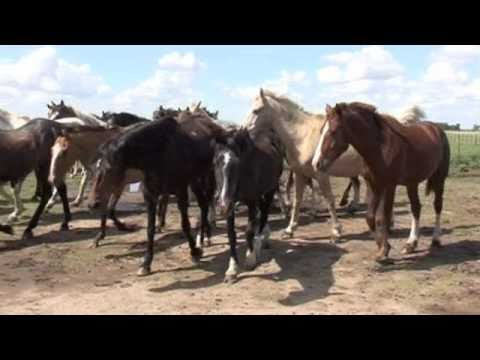 From horse to plate : Argentina