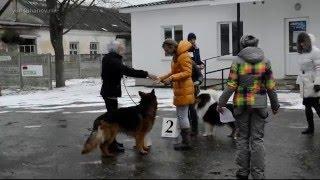 Выставка собак. 20.02.2016, г. Молодечно, Беларусь