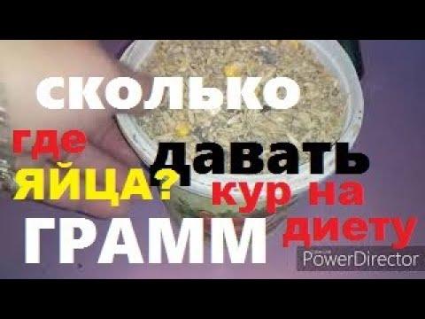 Почему Куры не несутся!Зажирели!Сколько грамм корма в День давать Курам?Количество корма на Курицу