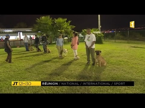 Saint-Denis, Jamaïque : club de dressage de chiens - YouTube