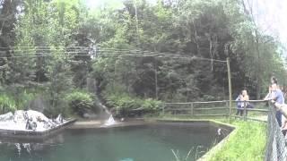 river djurpark