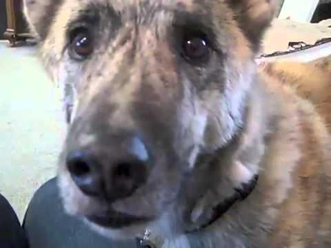 Chó nói tiếng người_ Người nói tiếng chó.