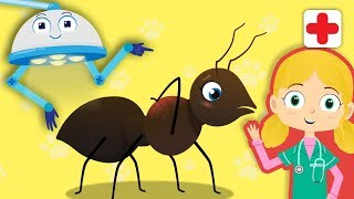 What's up with Alice the Ant? | Dr Poppy's Pet Rescue | Animals For Toddlers