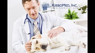 Watch Veterinarian Treat Dog Suffering from Ascites using Ultrasound