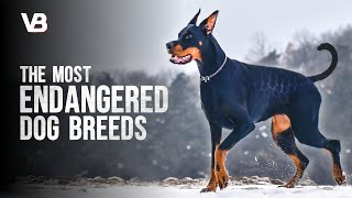 These Are The Most Endangered Dog Breeds