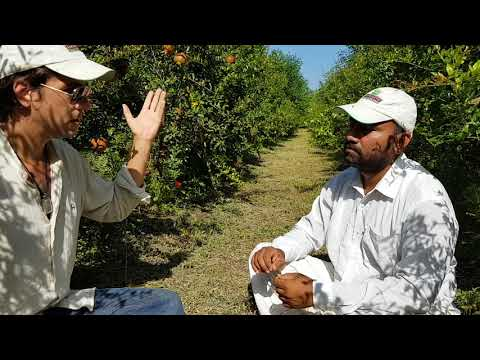 WHY ORGANIC? Interview with Two Brothers Organic Farms