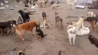 приют для животных Дора
