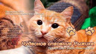 Кот вернулся с того света чудесное спасение Рыжика priyut Dari dobro Novosibirsk