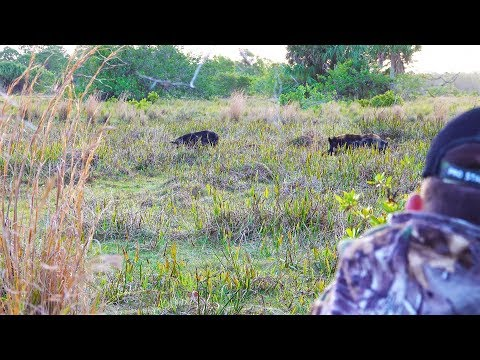 Giant Spotted Boar {Catch Clean Cook} 3 In 1!