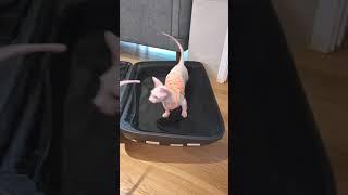 여행가방 속에서 싸움난 고양이들(A fight between cats)