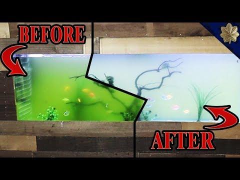 3 WAYS To Rid Yourself Of Green Aquarium Water