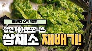 [수경재배] 베란다 텃밭? 가정용 양면 채소재배기!