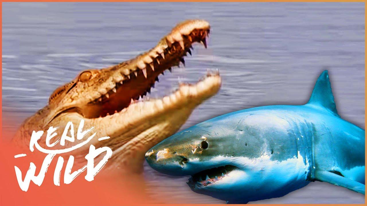 The Predator's Bay [Crocodile Documentary] | Real Wild