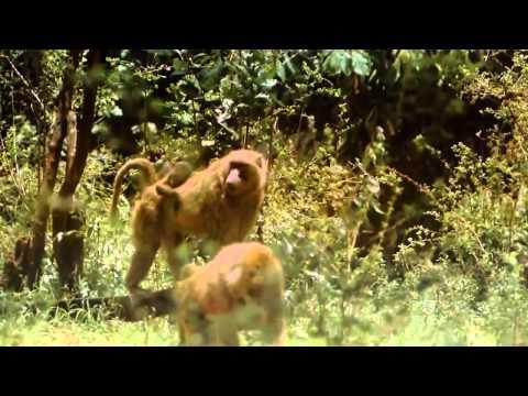 Thực hành sinh 7 - xem phim về tập tính của thú : Môi trường sống - cách di chuyển  của lớp thú