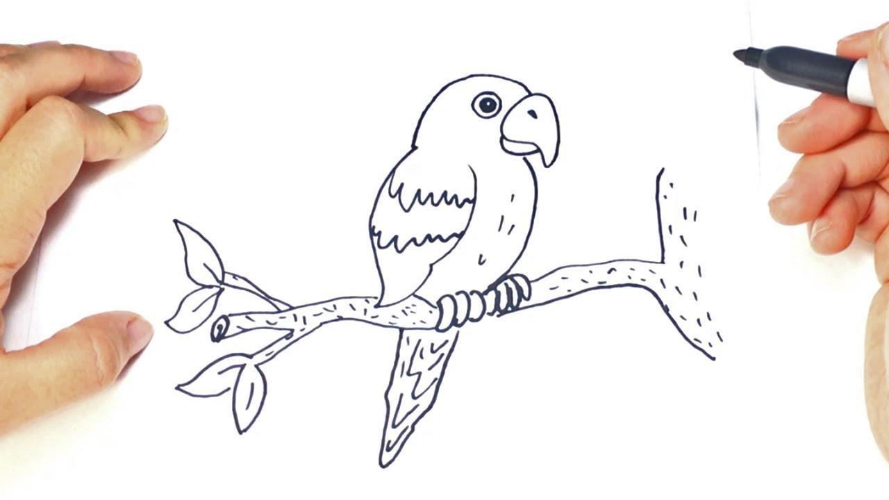 Como dibujar un loro paso a paso dibujo facil de loro for Como disenar un jardin paso a paso