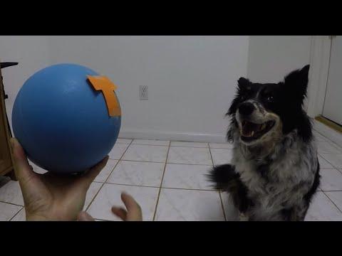 "Dog Training: The ""P U S H"" Command"