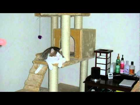 How to make a cat tree youtube for How to build a cat perch