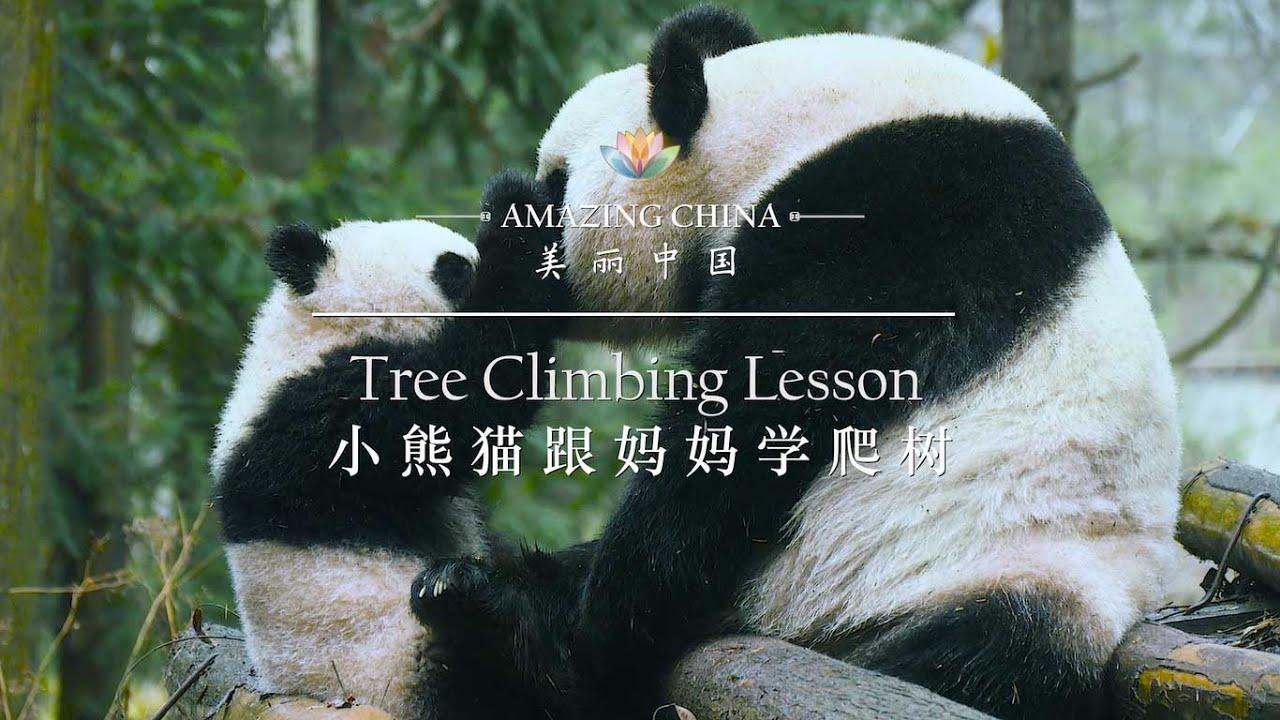 【Amazing China】Tree Climbing Lesson   iPanda