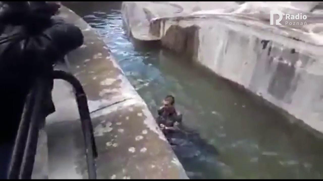 دب يهاجم رجل احمق سقط في قفصه في احدى حدائق الحيوانات
