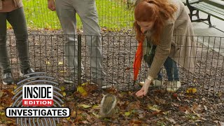 Why Feeding Squirrels Can Be Dangerous