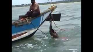 Catamaran fishing