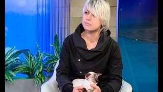 Заводчик-фелинолог Юлия Клюева: я нашла породу кошек, на которую у меня нет аллергии